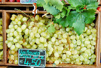 Moscato grapes from Puglia