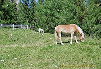 Some ponies at Passo Giau