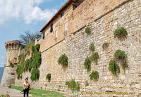 San Gimignano city wall, with caper plants, at Porta San Giovanni