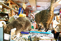 Book-loving cats at Libreria Aqua Alta