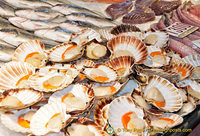 Beautiful scallops
