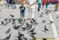 The pigeons are back in St Mark's Square