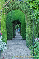 Generalife Gardens: Thick cypress hedges form the walls of the Lower Garden