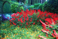 Generalife Palace: Splash of colours in the garden