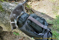 An inquisitive cat sniffing out Tony's camera bag