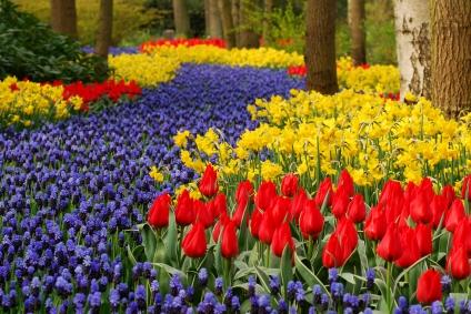 Keukenhof Springtime