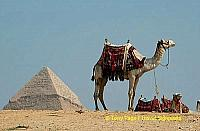 The Lone Camel.