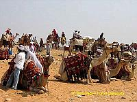 Camel park.