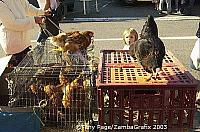 Chooks for sale - Chateaubriant market day