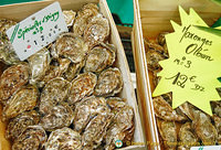 Oysters from different regions of France