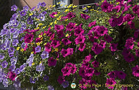 Colorful petunias provide added beauty to the town