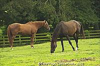 In 1945 the Irish National Stud Company was formed