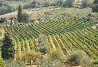 Some San Gimignano vineyards