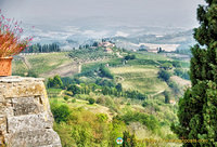 San Gimignano vineyards and countryside