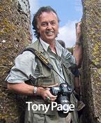 Tony Page